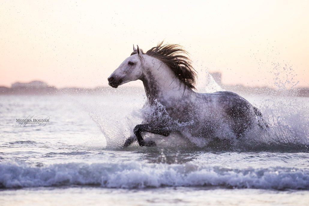 Fotoevent Portugal Pferd frei im Meer