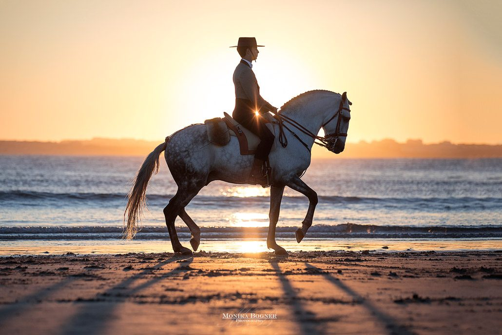 Fotoevent Portugal Piaffe am Meer im Sonnenuntergang