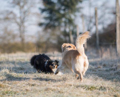 Denny und Luna beim Spielen während des Coachings