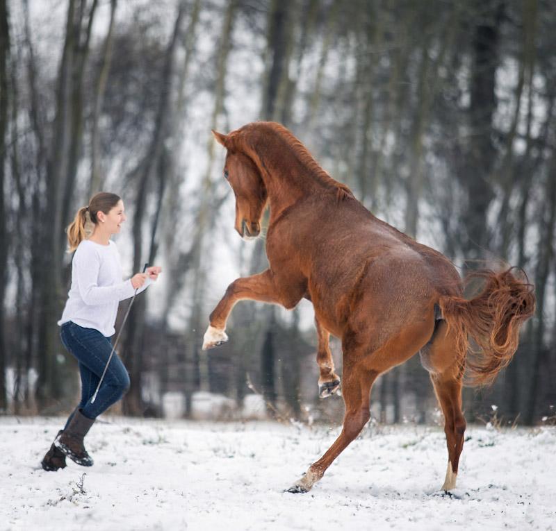 Pferdefotografie Bayern - Alisa Konrad und ihr Araber Astron aus Würzburg