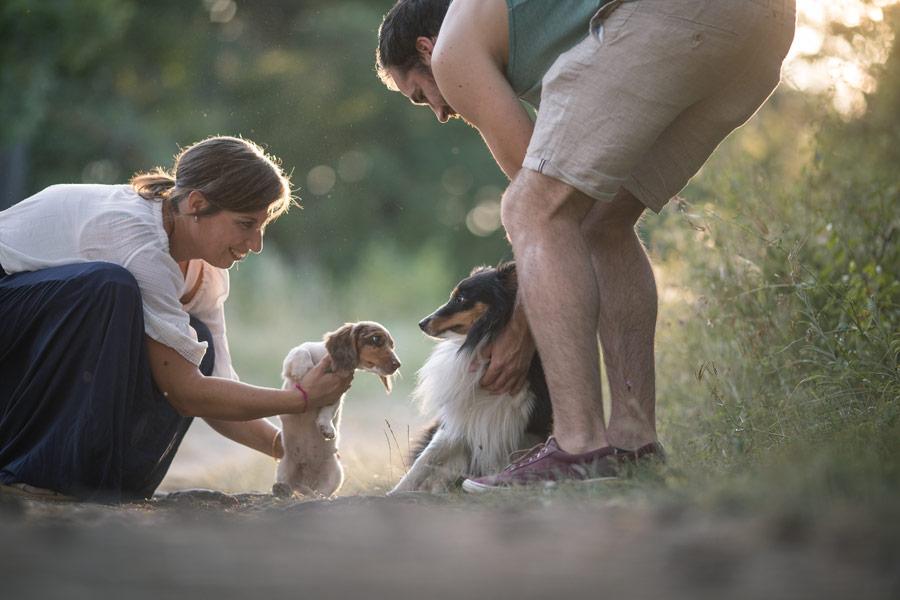 Fotografenhunde in der Zusammenführung - Sheltie & Dackel