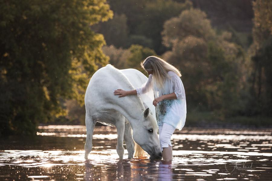 Freilauf im Wasser, Pferdefotografie Würzburg, Action, Lipizzaner, Schwimmen mit Pferd