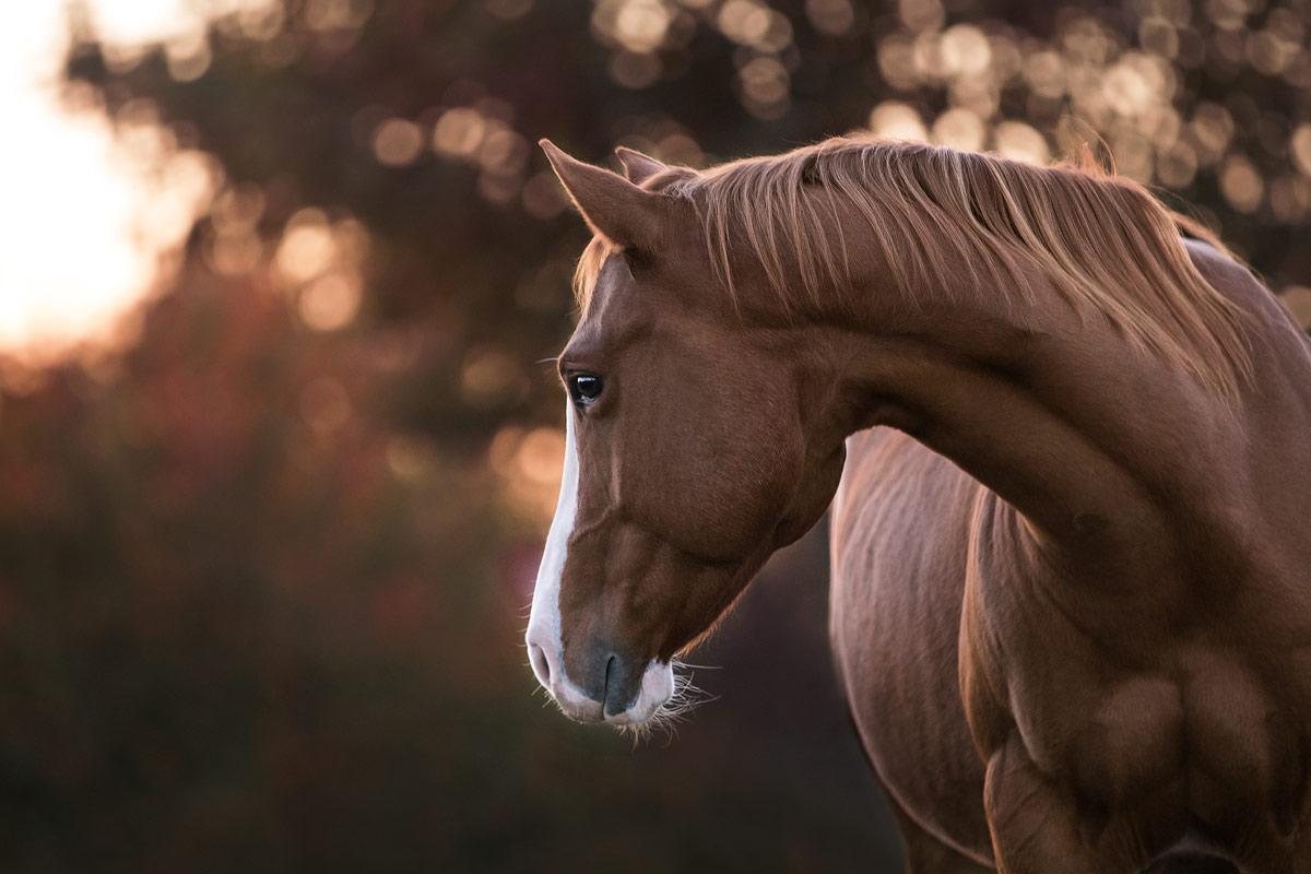 Pferdefotografie Alisa Konrad in Bayern und europaweit