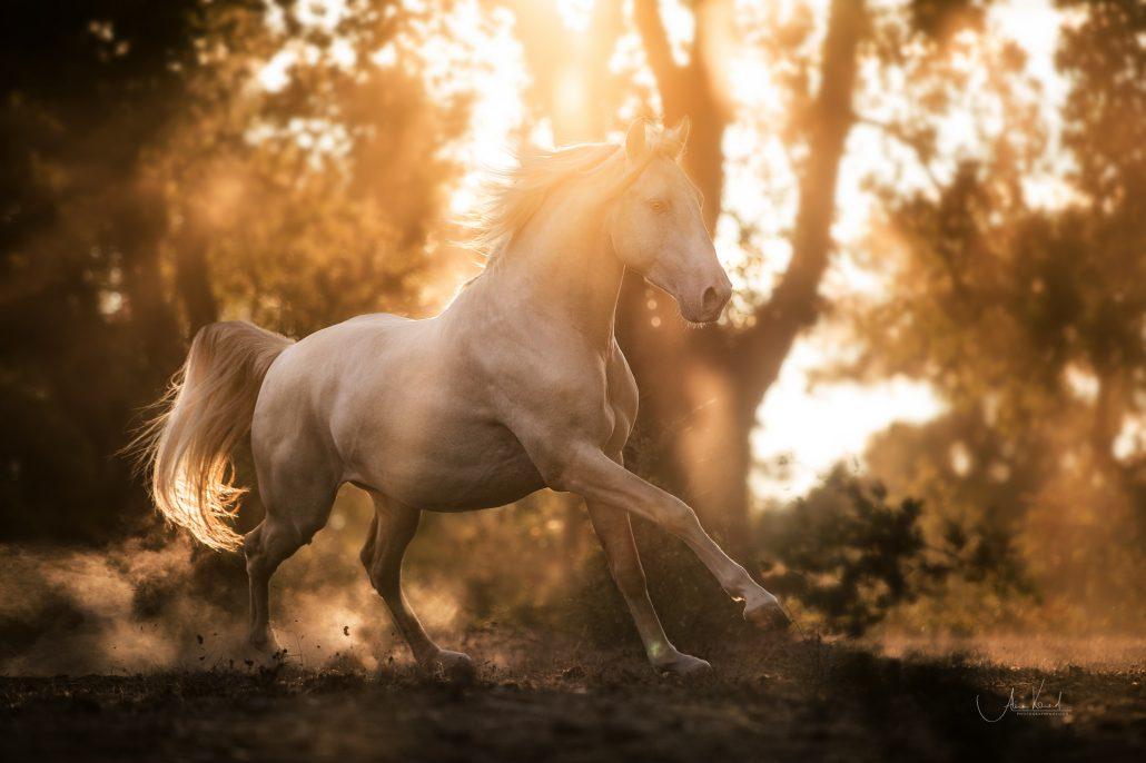Fotoreise Portugal mit Alisa Konrad und Fabielnne Thomanek - Pferdefotografie im Süden
