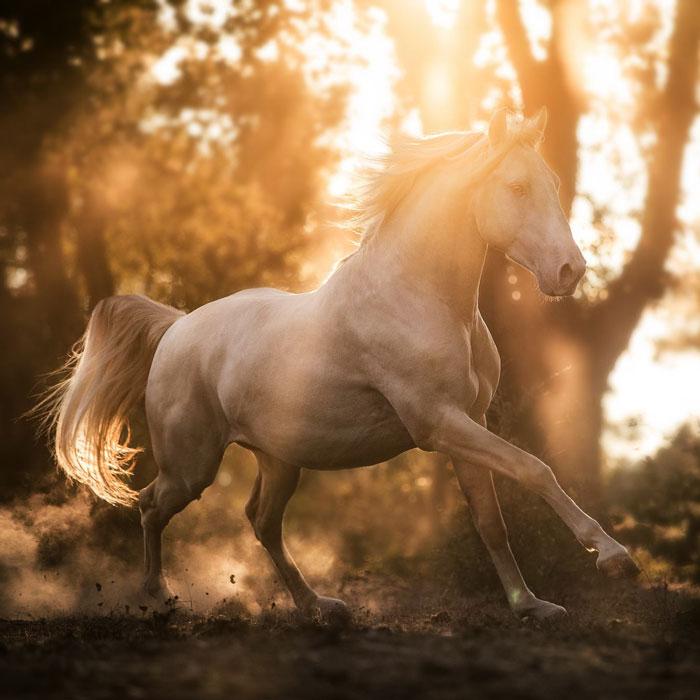 Coaching Pferdefotografie - Alisa Konrad in Bayern und europaweit