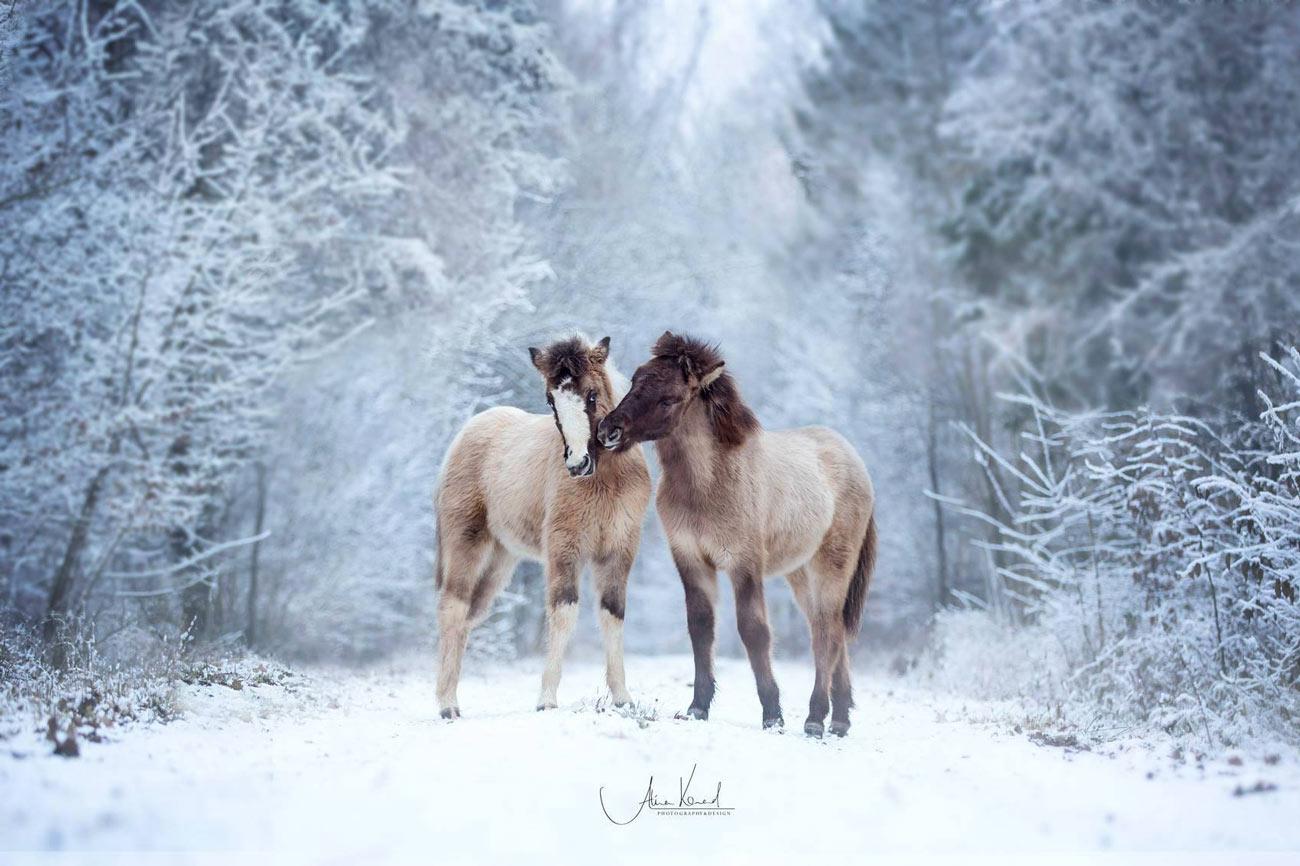 Pferdefotografie Bayern, Würzburg, europaweit, Coachings und Workshops - Alisa Konrad