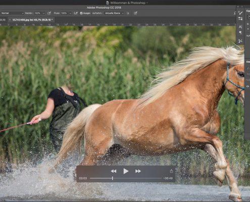 Onlinetraining Halfter weg, Ohren hin - Photoshop für Einsteiger
