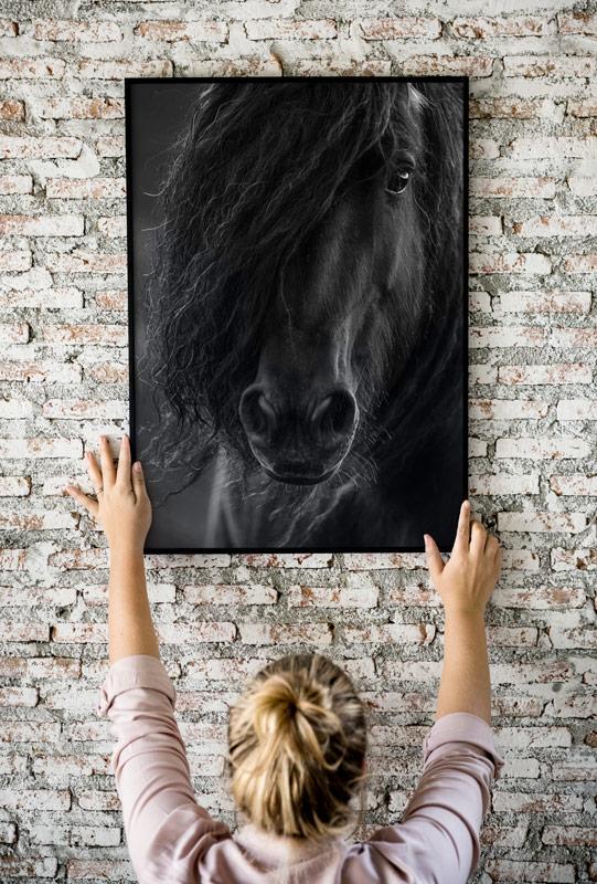 Pferdefotografie an der Wand - Pferdefotos von Alisa Konrad