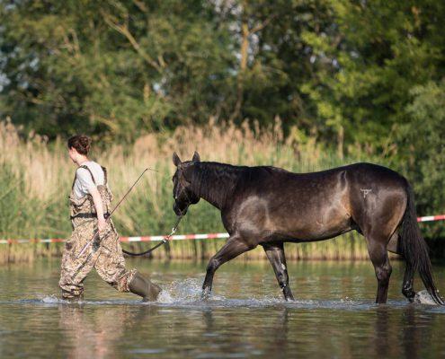 Pferdefotografie im Wasser - Portfoliotag, Wann und wo