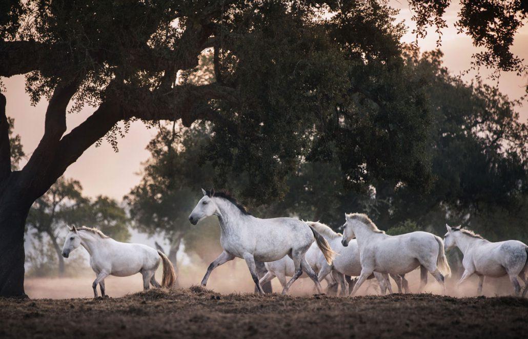 Fotoreise Portugal, Fotografieren lernen,Pferdefotografie Coaching, Kamera Technik Fotografieren lerne