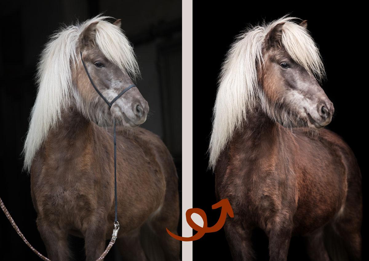 Bildbearbeitung mit Photoshop, Retusche lernen, Foto bearbeiten, Kurs Dodge & Burn