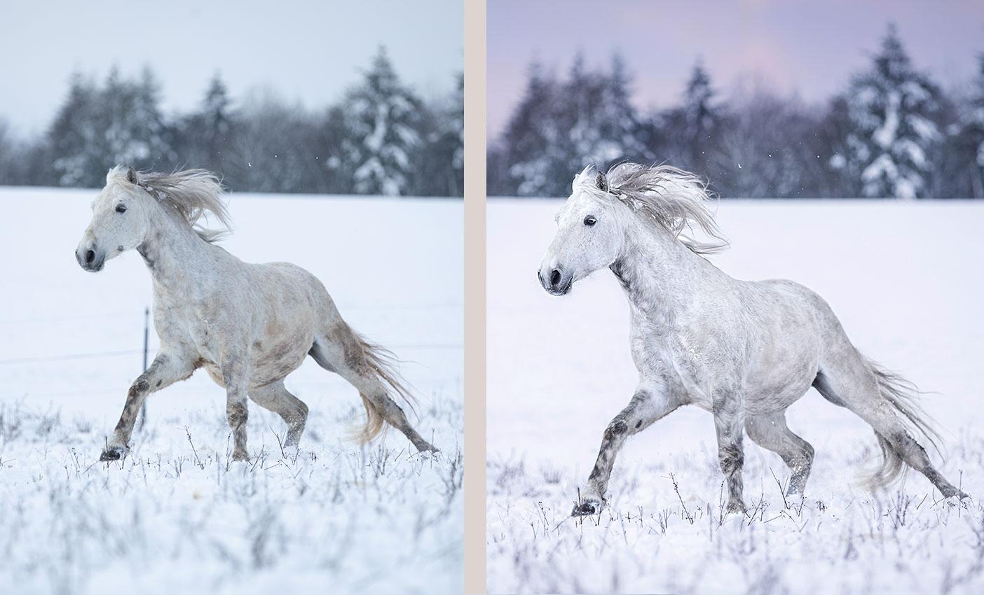 Pferdefotografie Coaching, Deutschland, Bayern, Würzburg, Fototräume wahr werden lassen, Fotografieren lernen