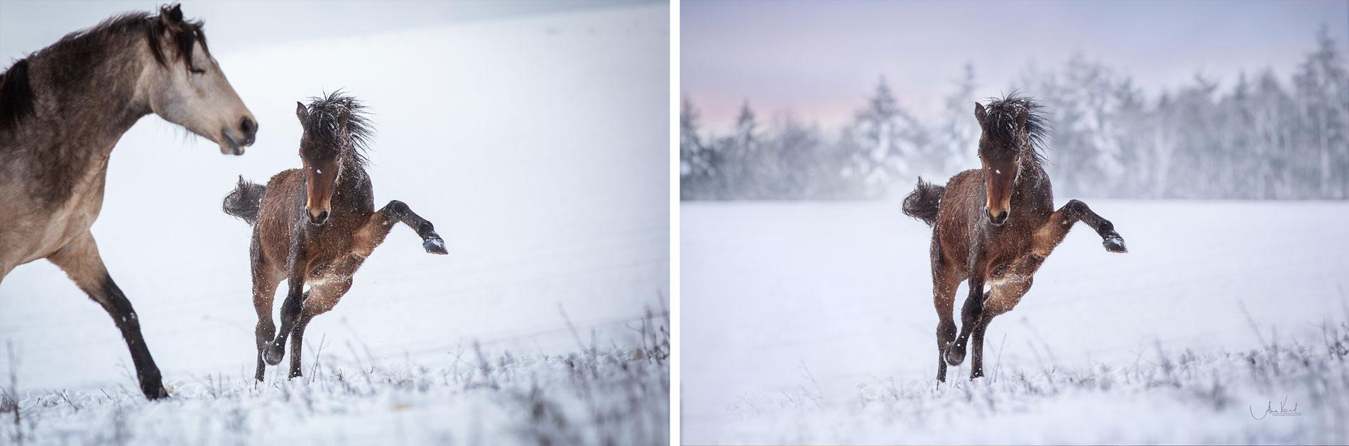 Pferdefotografie - Bildbearbeitung mit Photoshop, Retusche, Hintergrund tauschen