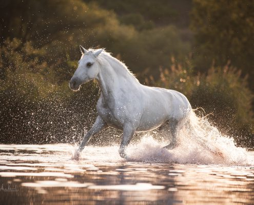 Fotoevent Freilauf im Wasser, Portfoliotag Pferdefotografie, Pferde fotografieren, Workshop Pferde im Freilauf