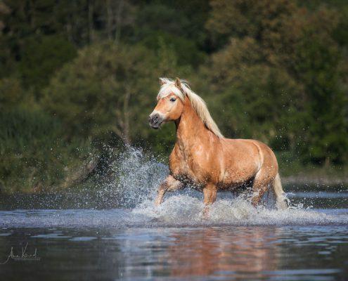 Pferdefotos Würzburg, Pferdefotografie Bayern, Pferdefoto machen,Pferdefotografin, Pferd im Wasser